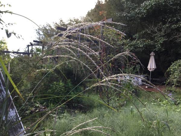 10月10日 アリスの森の目覚めです。
