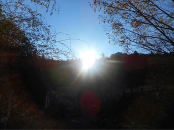 朝日に照る紅葉