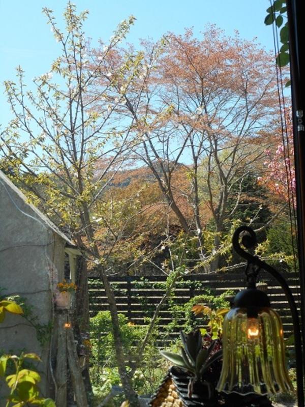 アリスの森は、桜のラストウィーク