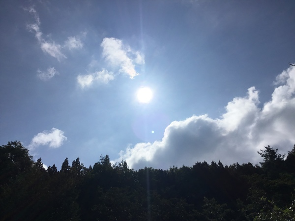 2019年9月16日 アリスの森の目覚めです。No,1097