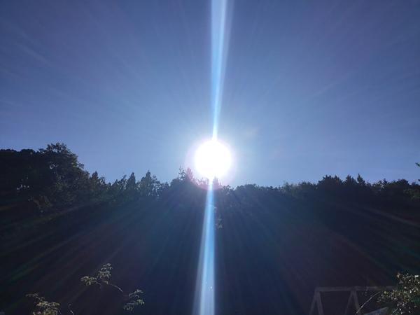 2019年9月25日 今日のアリスの森の目覚めです。No,1106