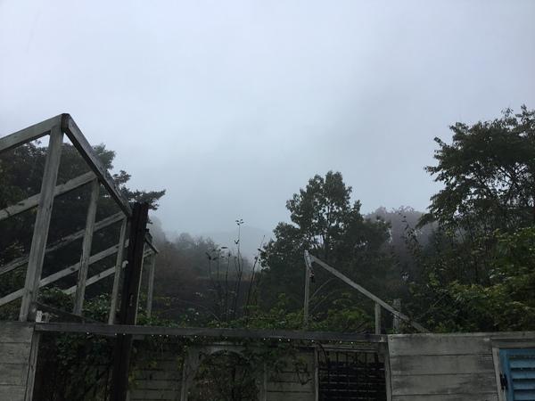 2019年10月29日 今日のアリスの森の目覚めです。No,1141