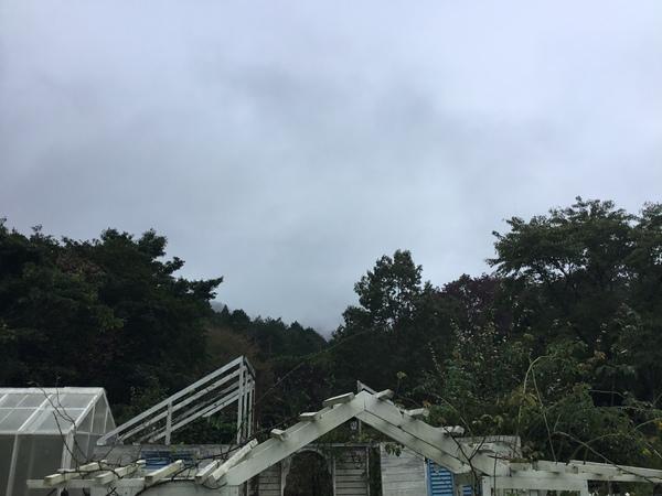 10月14日 今日のアリスの森の目覚めです。No,1125