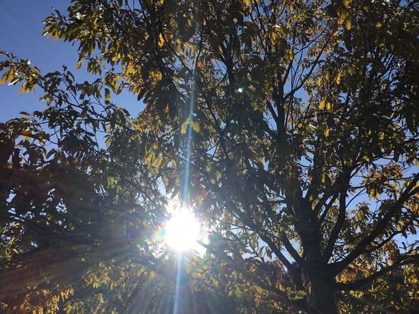2019年11月20日今日のアリスの森の目覚めです。No,1163