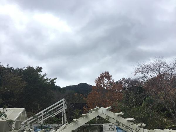 2019年11月28日今日のアリスの森の目覚めです。No,1171