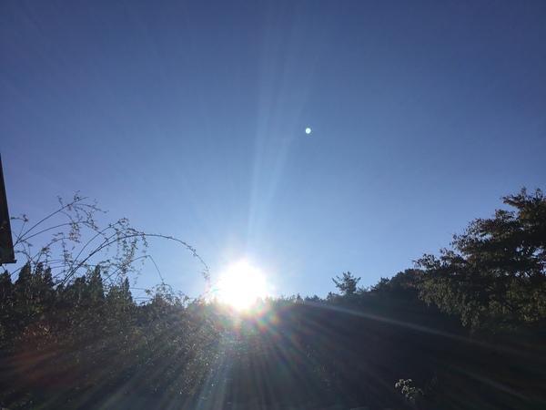 2019年11月6日 今日のアリスの森の目覚めです。No,1149