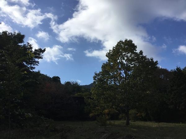 2019年11月8日 今日のアリスの森の目覚めです。No,1151