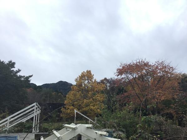 2019年11月22日 今日のアリスの森の目覚めです。No,1165