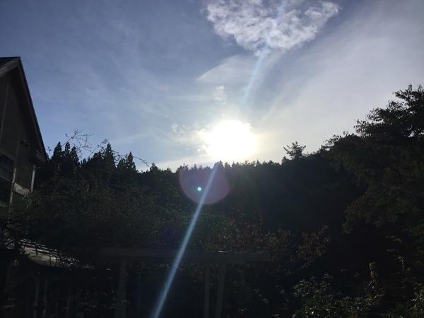 2019年11月3日 今日のアリスの森の目覚めです。No,1146