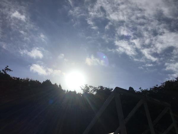 2019年11月19日 今日のアリスの森の目覚めです。No,1162