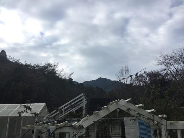 2019年12月17日今日のアリスの森の目覚めです。No,1190