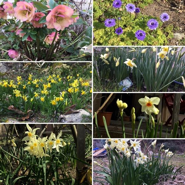 早春のアリスのガーデンと森の空気で免疫力アップ⤴️ コロナ騒動から逃避しにきませんか❣️