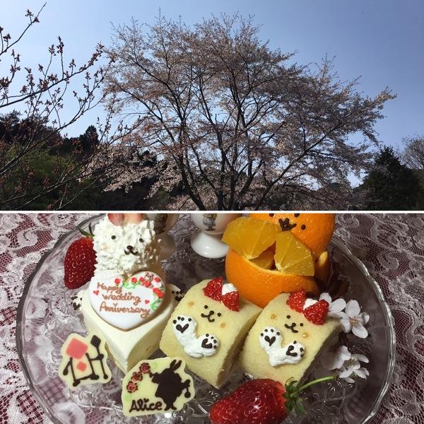 今日も桜🌸は満開❣️ 不思議のお祝いデコレーションでうれしい😂楽しい😊ひと時はいかが❣️