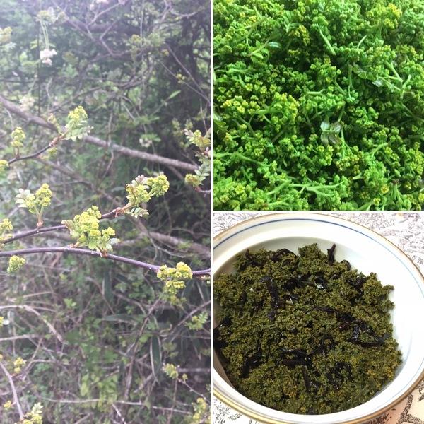 庭の花山椒を摘んで佃煮に❣️ 庭の姫リンゴやナルコユリが咲く🌸