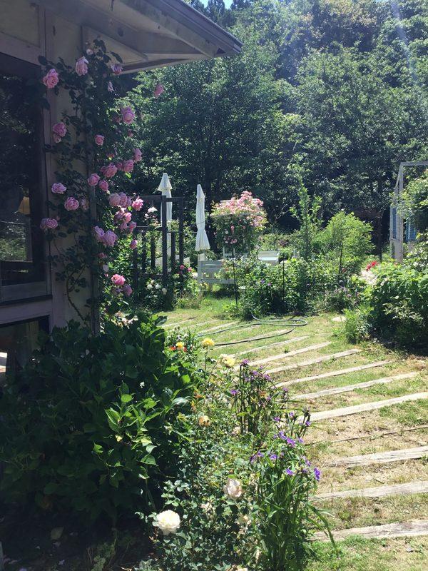 バラ香る不思議の国の花園へ迷い込んでくださいね。