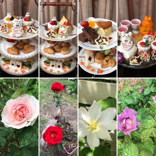花咲くアリスでパテシエアリスの絶品のケーキをお楽しみくださいね。