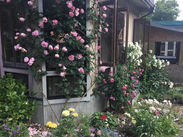 薔薇咲く不思議の国の花園でくつろぎのひと時をお楽しみくださいね。🌹