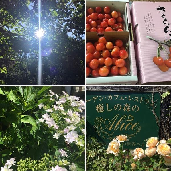 今日は夏至&かに座新月で宇宙のエレルギーを受け取ろう❣️不思議の国の花園&蛍ツアーも実施中ですよ。😊