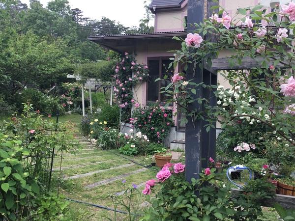 アリスのローズガーデンは花盛り🌹🥀不思議の国のアフタヌーンも好評です。❣️