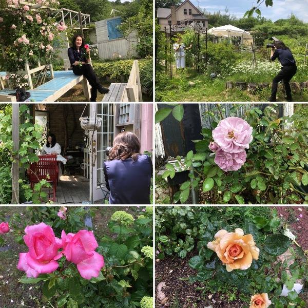 不思議の国の花園で、プロフィール写真撮影会を開催❣️今日も雨に負けず、沢山の花が咲いてるよ😊