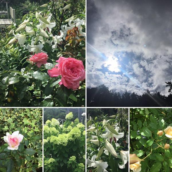 カサブランカの香りが漂う不思議の国の花園へ迷い込んでくださいね。
