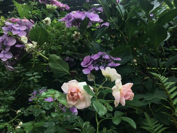 もういくつ寝ると梅雨明けかな❓雨でも元気に咲く不思議の花園へ迷い込んでくださいね。