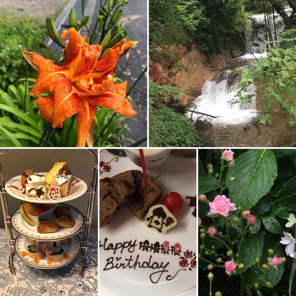 アリスの滝でマイナスイオンたっぷりの空気で深呼吸してくださいね。不思議の国の花園は今日も元気いっぱいです。