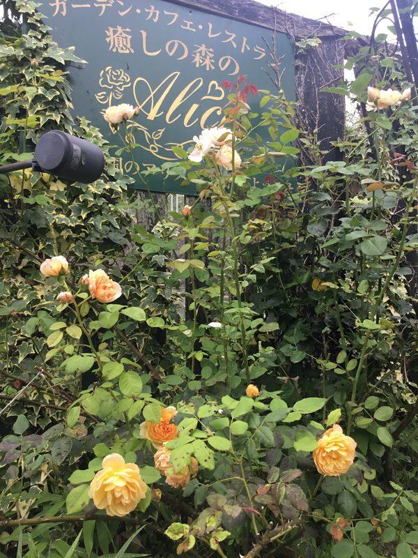 色んな花咲く不思議の国の花園へ迷い込んでくださいね。ハーブの花も咲いてますよ❣️
