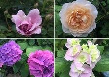 今日は雨はお休み。色んな花咲く不思議の国の花園へ迷い込んでくださいね。