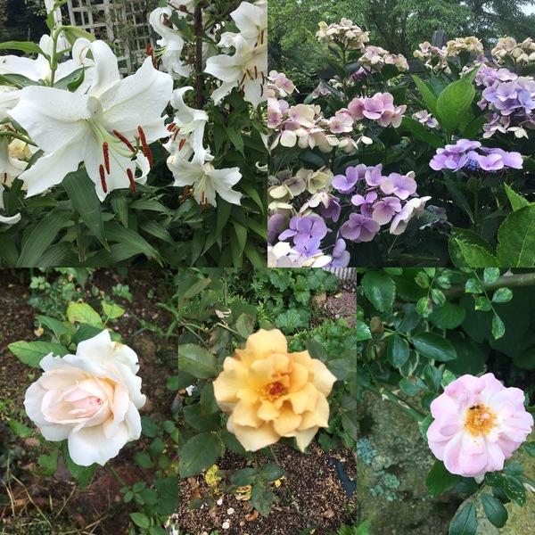 カサブランカの香りが漂い、アジサイ、四季バラ咲く不思議の国の花園で素敵なひと時をお楽しみくださいね。
