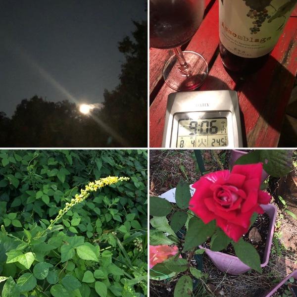東の森から満月が昇る夜、気温は23℃の涼しい国のアリスで夕涼みしませんか?