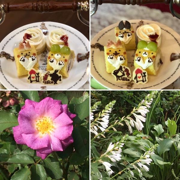 かわいいロールケーキのアフタヌーンティーが人気者😊今日も不思議の国へ迷い込んでくださいね。❣️