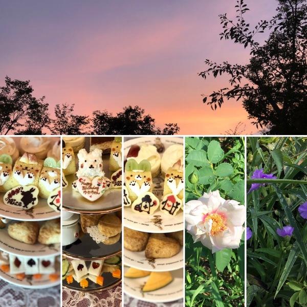 昨日の夕焼け綺麗でしたよ。アフタヌーンティーが人気者😊今日も色んな花咲く不思議の国の花園へ迷い込んでくださいね。