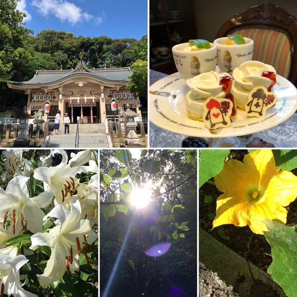 今日は8月1日 公智神社の月次祭へ‼️ランチ&アフタヌーンティーの欲張りデザートもおすすめ🍰今日も色んな花咲く不思議の国の花園へ迷い込んでくださいね。