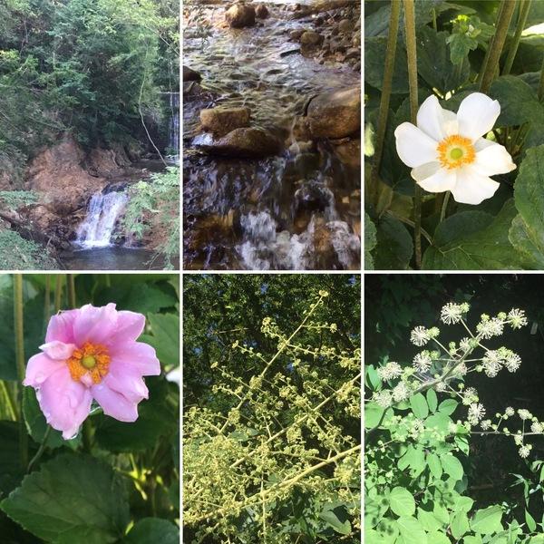 涼しい国のアリスより❣️清流&涼風流れる不思議の国の花園へ迷い込んでくださいね。