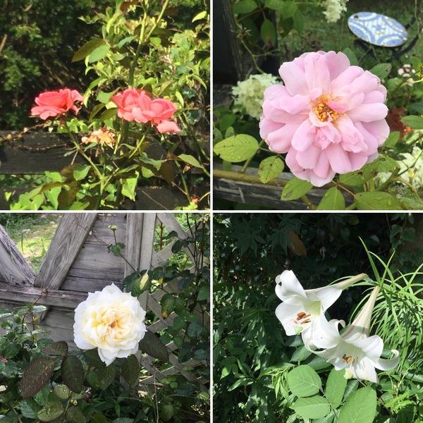 お盆休みが終わって今日から再スタート❣️今日も色んな花咲く不思議の国の花園へ迷い込んでくださいね。