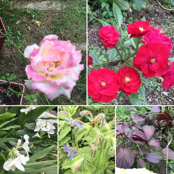 ジンジャーリリーの香りに誘われて、不思議の国の花園へ迷い込んでくださいね。