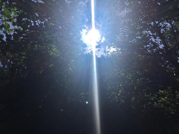 台風一過、森に注ぐ神々しい光。里山に実りの秋が訪れています。