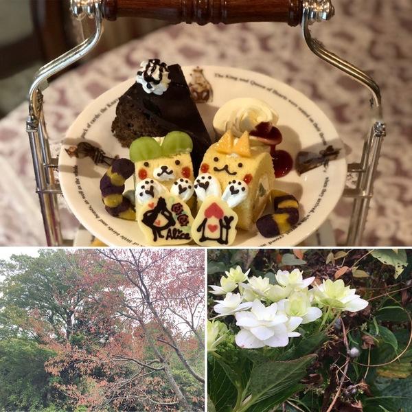 有馬温泉瑞宝寺公園の紅葉が見頃です。紅葉兼ねてアリスのランチやアフタヌーンティーはいかがですか?