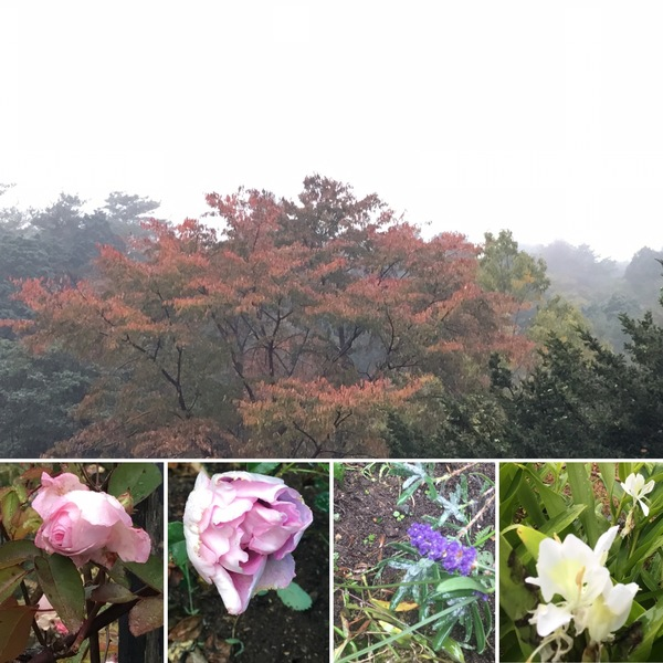 彩るアリスの森🍁🍂今日も色んな花咲く不思議の国の花園に迷い込んでくださいね。