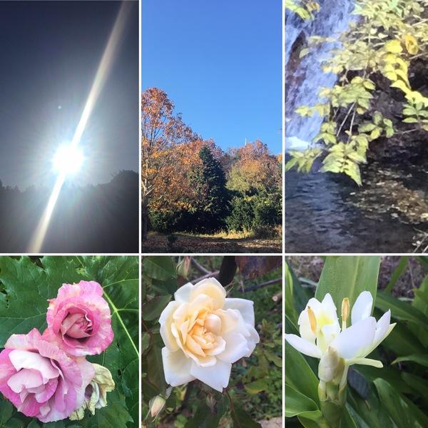 今日も光り輝く山粧う不思議の国の花園に迷い込んでくださいね。