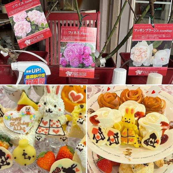 昨日はアフタヌーンティーとお誕生日会でかわいいケーキが大活躍❤️バラ苗の福袋が到着🌹春をお楽しみにね。🥰