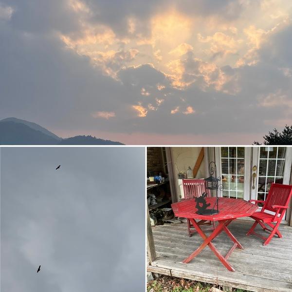 2羽のトビが天に舞い上がり朝。そして昨日は、今年初のテラスでわんちゃん🐶連れのお客さま。