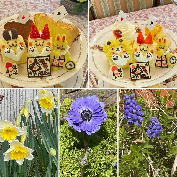 早春の花咲く不思議の国の花園で、かわいいアフタヌーンティーお楽しみくださいね。🍰今日から三日間アリスはお休みです。