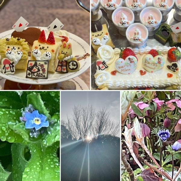 昨日もアフタヌーンティーや合格祝いなどで賑わったアリスです。🥰ガーデンでは忘れな草が咲き始めました。春ですね。❣️