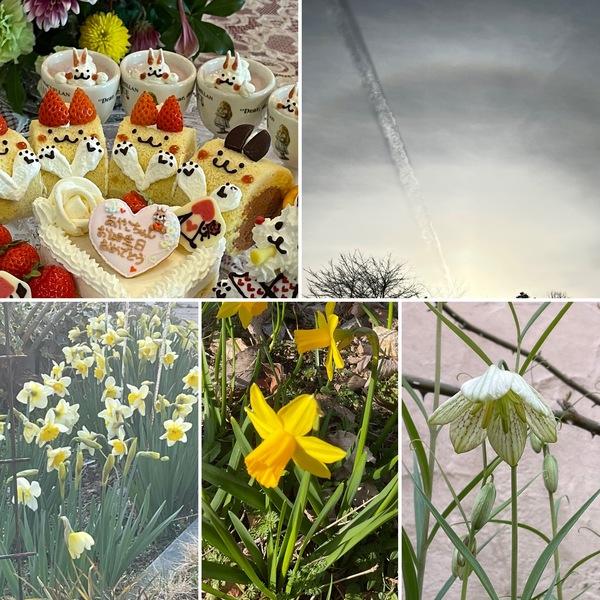 昨日はお誕生日のお祝い🎉荘厳な夕陽に感動🥰ガーデンは水仙が満開 春ですよ❣️