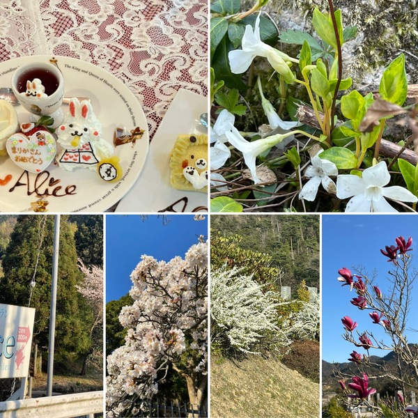 有馬にも桜咲く🌸今日のアリスは満席です。🙇♂️