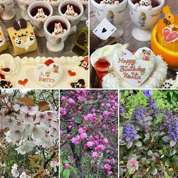 昨日も入学祝い&お誕生日会で大賑わい❣️満開の桜がお出迎えするアリスです。