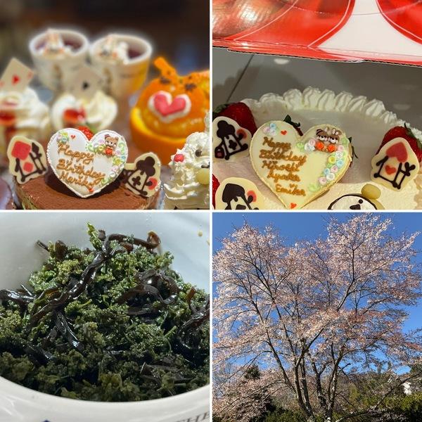 もうしばらく桜に囲まれるアリスで迎えるお誕生日❣️薄口醤油で色鮮やかな花山椒の佃煮