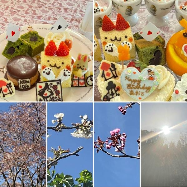 春の光と桜の中で不思議のアフタヌーンやお誕生日会🎂お楽しみくださいね。アリスの森は遅咲きの桜にバトンタッチです。